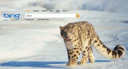 Поисковик Microsoft Bing пользуется успехом у пользоват