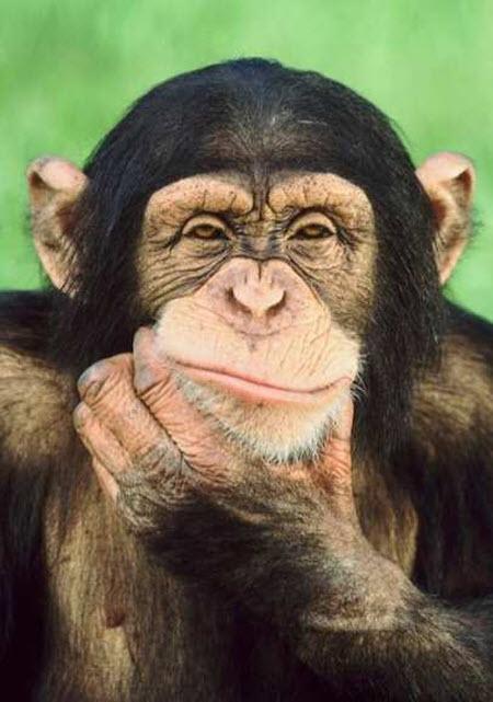 В эксперименте с законом Архимеда дети проиграли шимпанзе